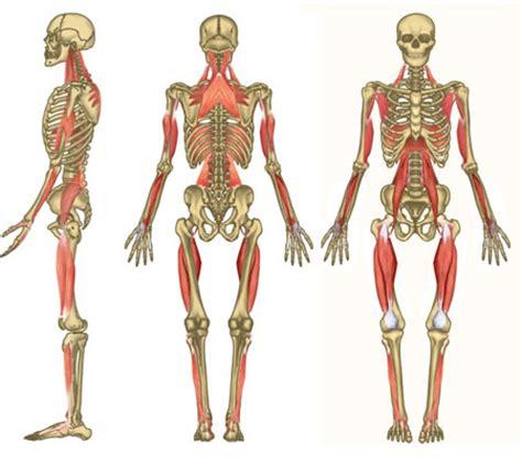 cadenas musculares gds libros cadenas musculares y articulares gds valoraci 243 n y