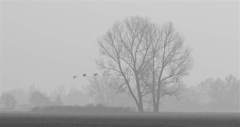 kraniche im nebel forum fuer naturfotografen