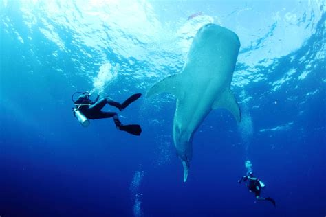 dive in scuba diving in the philippines top 10 dive
