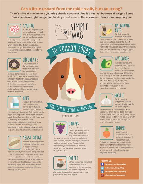 toxic foods for dogs toxic foods for dogs