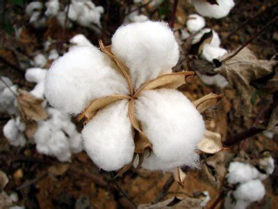 almohadas fibras naturales cultivo de algod 243 n