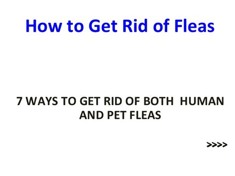 how to get rid of fleas in your bed how to get rid of fleas