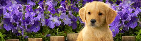 puppy with flowers canada