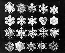 Willie Bentley Snowflakes Snowflake Bentley Biography