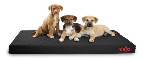 chewproof dog bed 6 indestructible dog beds for chew tastic dogs rover com
