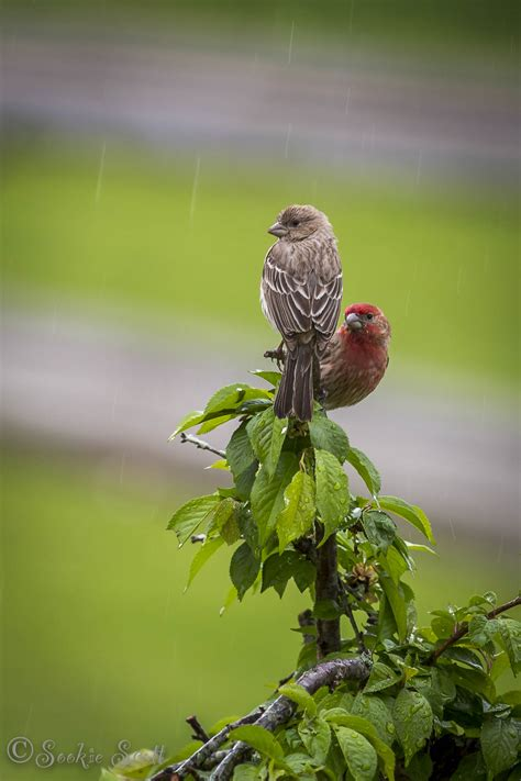 images of love birds in rain love birds in the rain birds and blooms