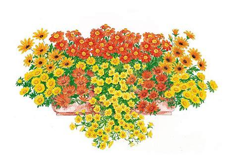 balkonpflanzen sonnig spar set k 187 set sonnige farben 171 kaufen otto
