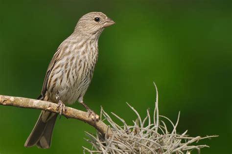 jeff wendorff nature and wildlife photography portfolio