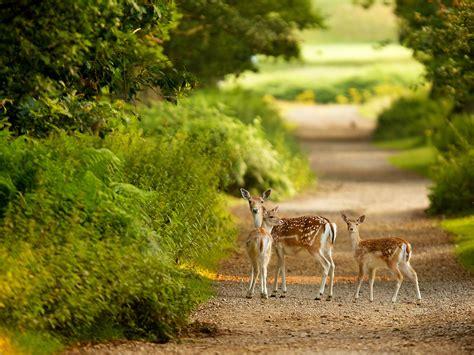wallpaper cute nature cute gazelle family looking at camera hd wallpaper hd