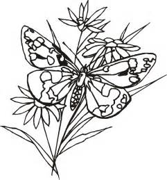 free butterfly coloring pages butterflies coloring pages