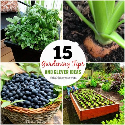 garden tips the 36th avenue 15 gardening tips and clever ideas the
