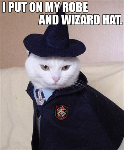 wizard cat robe and wizard hat intrawebnet