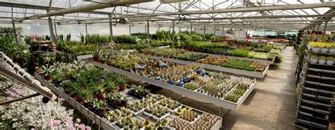 ci di fiori olanda flora olanda ingrosso piante fiori e non