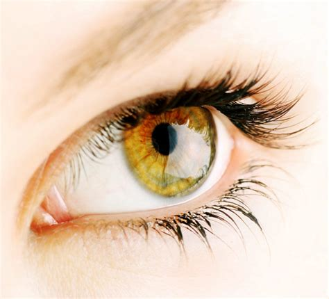 eye color hazel what determines hazel eye color