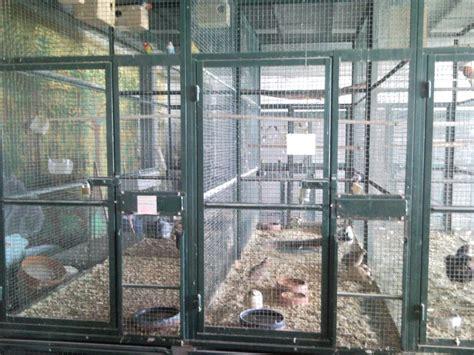negozio animali roma guardie ecozoofile sequestrati oltre 230 animali dalle