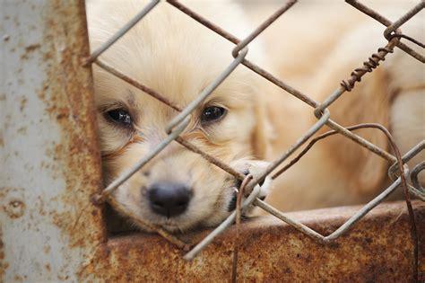 aspca puppy mills image gallery puppy mills