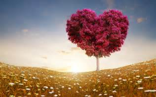 love heart tree fields wallpapers hd wallpapers