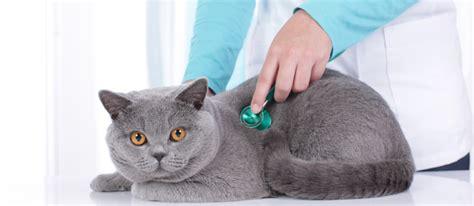 test ingresso medicina veterinaria laurea in medicina veterinaria