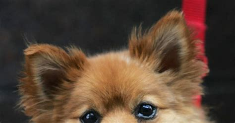puppy  life saving gender reassignment surgery ny
