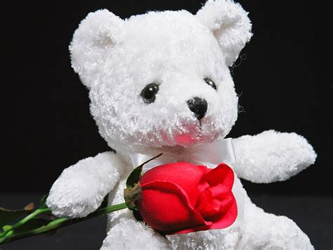 white teddy bear and red rose wallpaper wallpaper