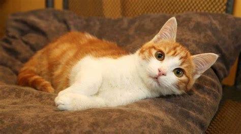regarder oscar et le monde des chats regarder streaming vf en france le chaton oscar dans la nouvelle saison de secret story