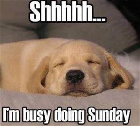 Funny Sunday Memes - funny sunday sayings kappit