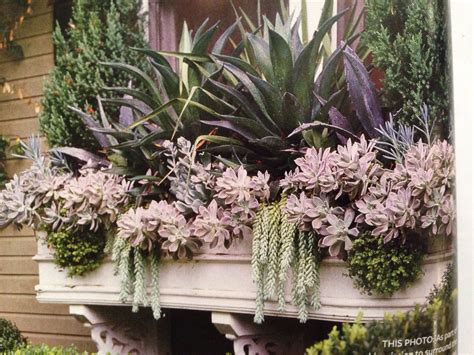 succulent window box dying outdoor living pinterest