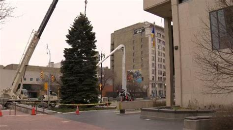winnipeg s christmas tree delivered to city hall ctv