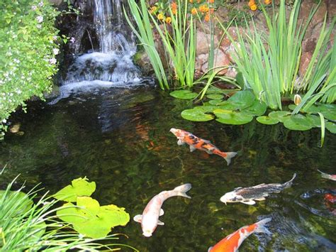 diy koi fish pond ideas for the home pinterest