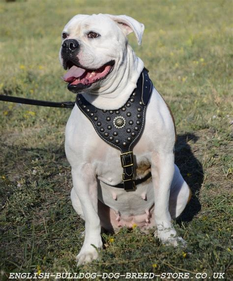 types of harnesses types of bulldog breeds part 2 bulldog uk shop harnesses muzzles