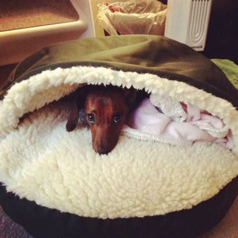 dog burrow bed burrow bed perfect for dachshunds adorable dachshunds pinterest caves pets
