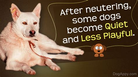 after neutering behavior myths and facts about behavioral changes in dogs after neutering