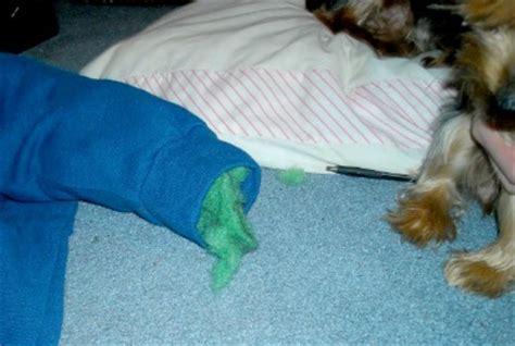 dog bed stuffing diy sweatshirt pet bed the craftiest couple