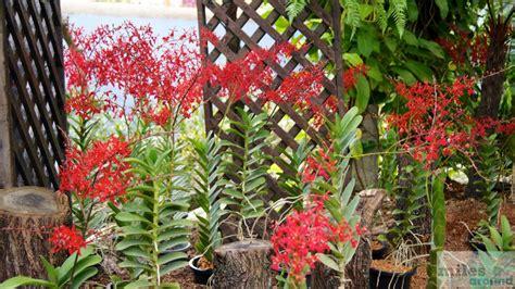 orchideen garten kuala lumpur orchideengarten taman orkid