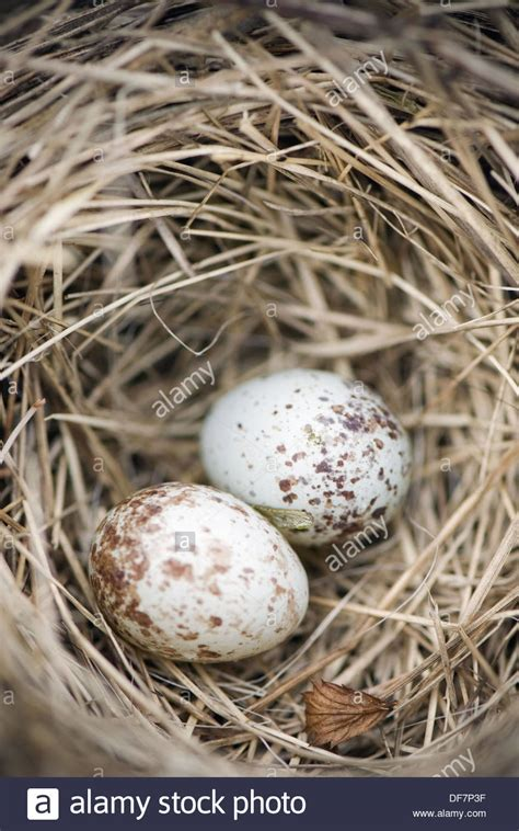 house sparrow eggs related keywords suggestions for house sparrow eggs