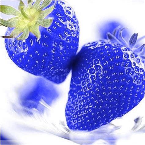Strawberry Blue favorable 500pcs blue strawberry fruit vegetable