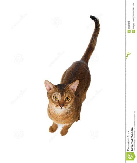 Cat Top cat top view www pixshark images galleries with a