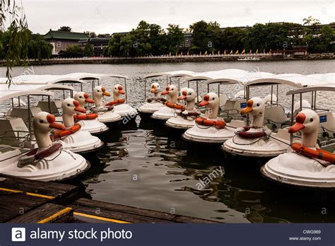 swan boats in echo park swan paddle boat stock photos swan paddle boat stock