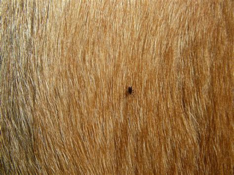 how to kill ticks on dogs and flea sprays two things that just don t mix