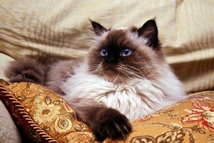 alimentazione gatti piccoli cibo per gatti fatto in casa non sprecare