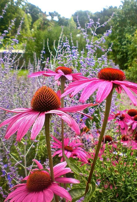 298 best perennials that bloom all summer images on
