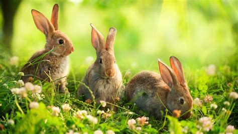 7 Facts On Bunny Rabbits by What Do Bunnies Eat