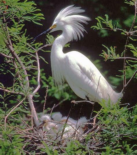 noir egrets no regrets