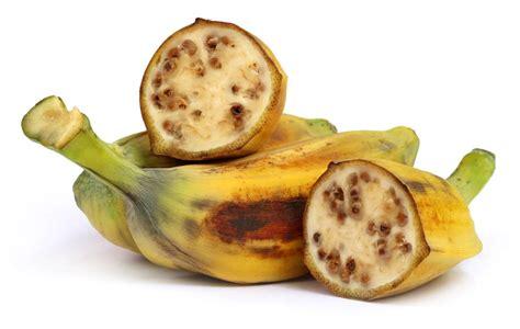 The Bananas australian bananas all about bananas the banana story