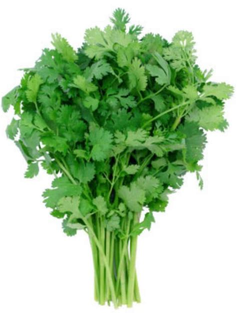 Cilantro Coriander Leaves 87g leisure cilantro seeds coriander spice culinary garden herb spice heirloom ebay