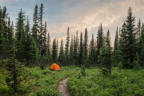 landscape plants trees camping green nature tents