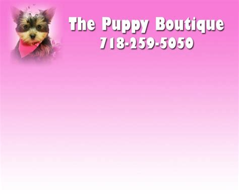puppy boutique ny the puppy boutique in new york