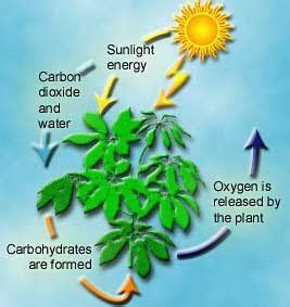 2 carbohydrates in plants how many of us can remember the memories