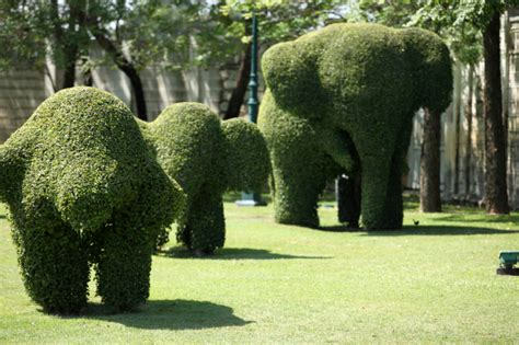 elephant topiary 53 stunning topiary trees gardens plants and other shapes