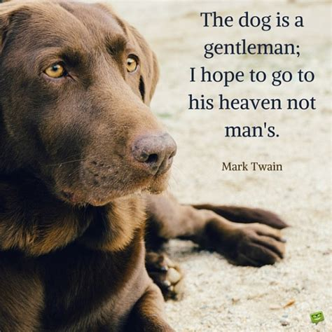 quotes about dogs quotes about dogs weneedfun